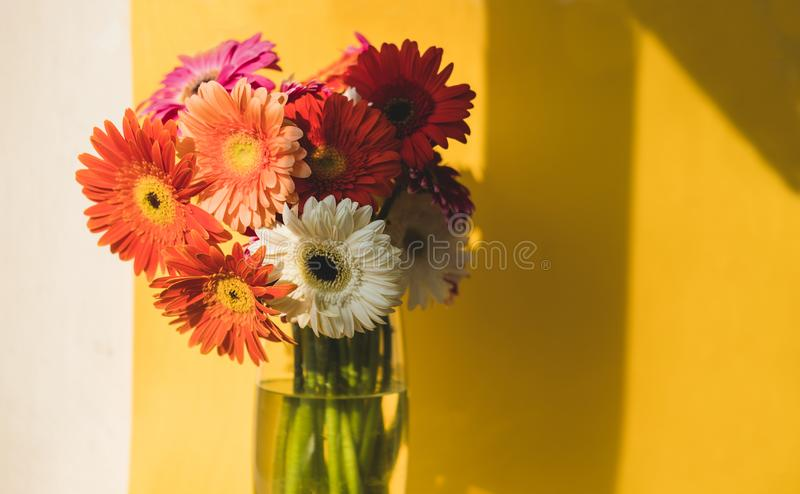 Bright beautiful red and yellow flowers bouquet of gerberas stand in glass vase on yellow background. Floral still life royalty free stock photo