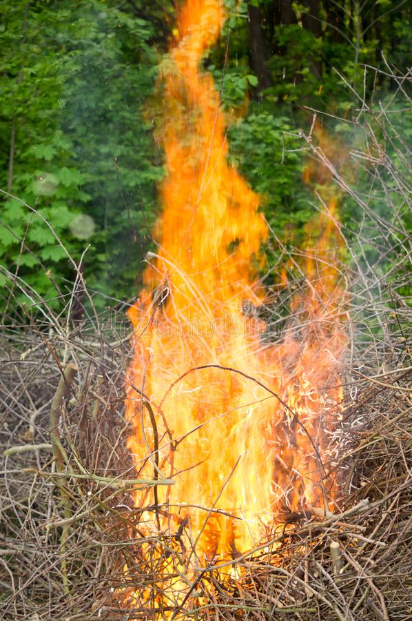Bright big bonfire while burning a large number of garbage branches stock images