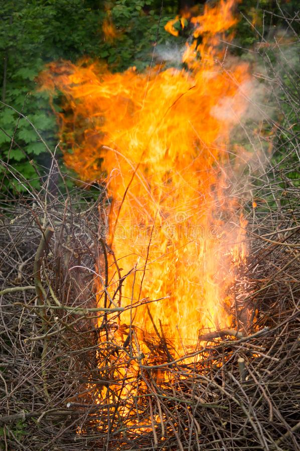 Bright big bonfire while burning a large number of garbage branches royalty free stock images