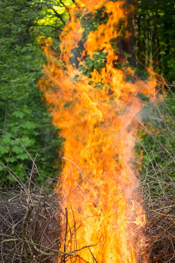 Bright big bonfire while burning a large number of garbage branches stock photos