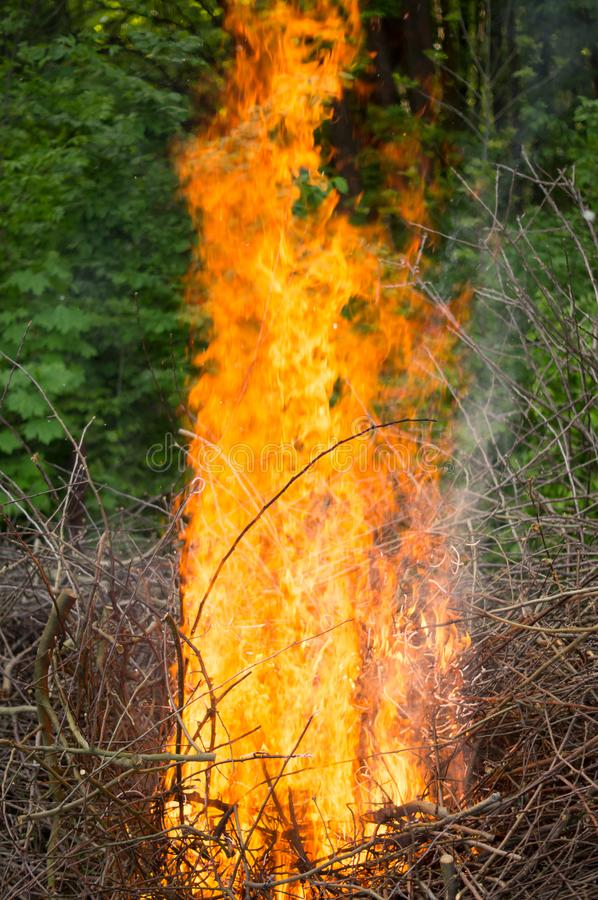 Bright big bonfire while burning a large number of garbage branches royalty free stock image
