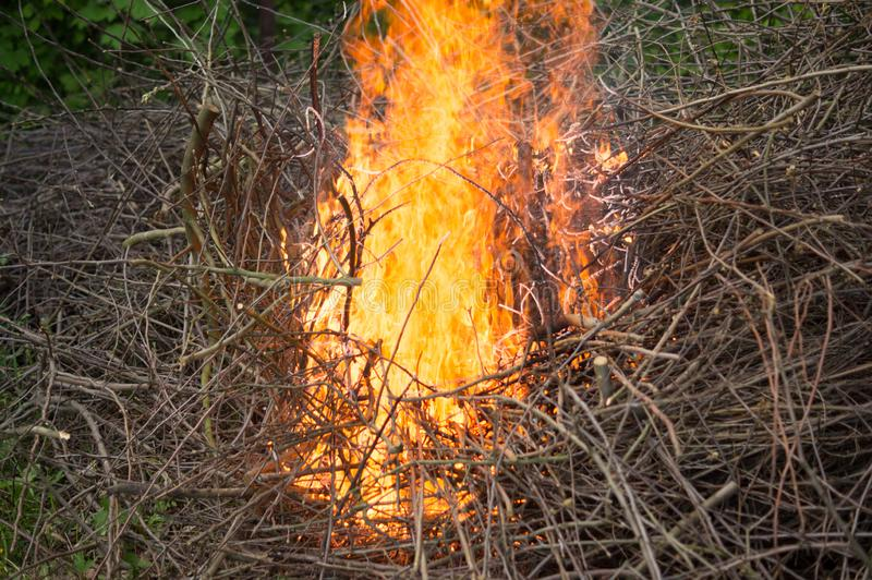 Bright big bonfire while burning a large number of garbage branches stock photo