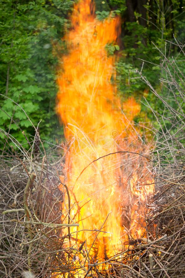 Bright big bonfire while burning a large number of garbage branches royalty free stock photo