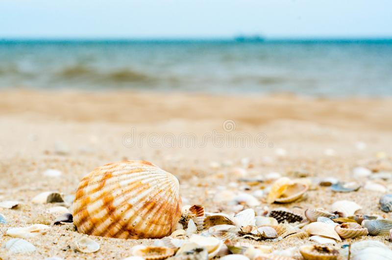 Bright big striped shell with another little different shells. In quartz sand against the blue sea and ships silhouette on the horizon stock photos