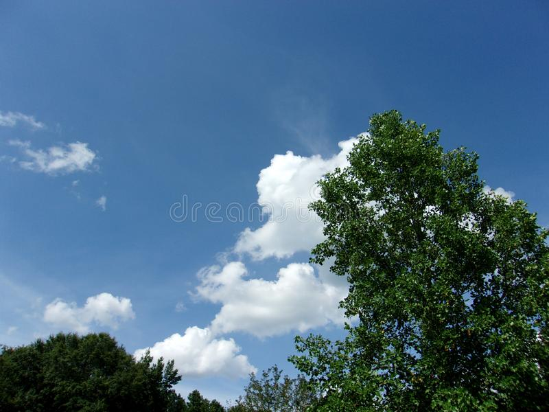 Bright blue skies and clouds overhead in the summertime 2. Bright blue skies and clouds overhead in the summertime on a hot day royalty free stock photography
