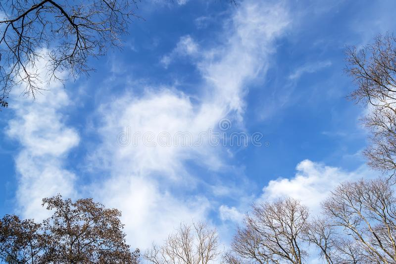 Bright blue spring sky with white clouds in the frame of tops of trees without leaves. Spring is coming. royalty free stock photography
