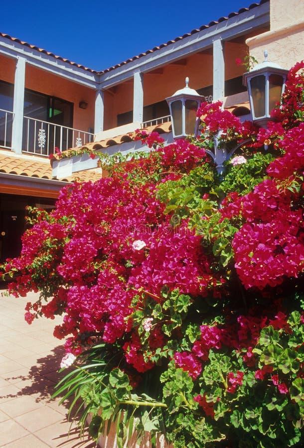 Download Bright Bougainvillea stock photo. Image of bush, lamp - 12722142