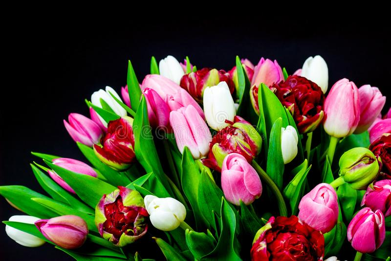 Bright bouquet of tulips on a dark background with floral background stock photos