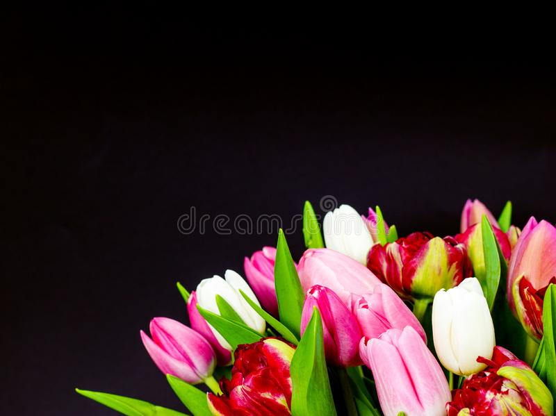 Bright bouquet of tulips on a dark background with floral background royalty free stock photo