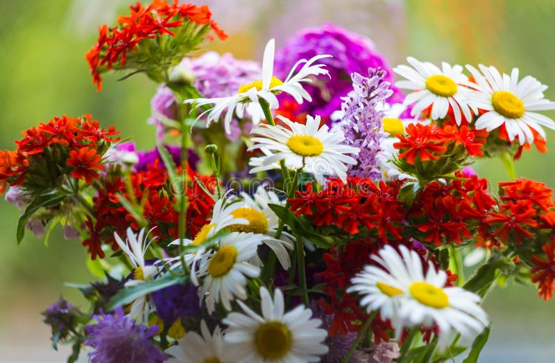 Bright bouquet of wild flowers with white daisies and red Campion on a green background. Close up. Red Maltese cross in the stock photography