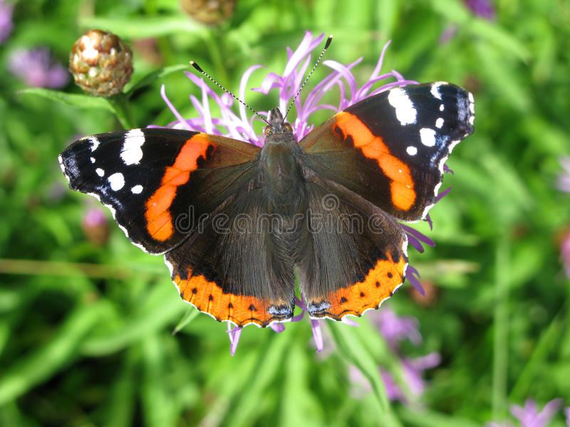 Download Bright butterfly stock image. Image of beauty, orange - 10704811
