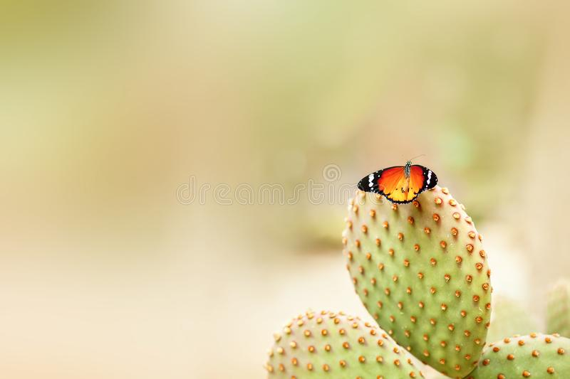 Bright butterfly on a cactus royalty free stock photography