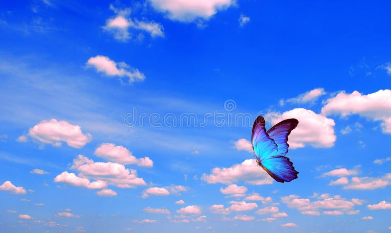 Bright butterfly flying in the blue sky with clouds. flying blue butterfly. morpho butterfly. copy spaces. Bright butterfly flying in the blue sky with clouds royalty free stock images