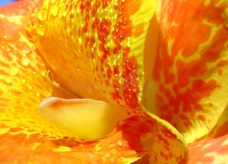 Download Bright Center stock photo. Image of gold, floral, flower - 195898