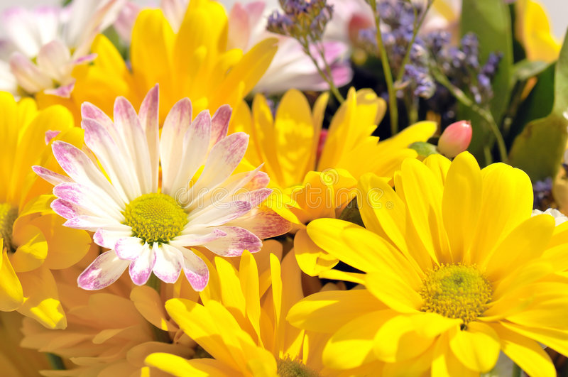 Download Bright Cheerful Spring Flowers Royalty Free Stock Photo - Image: 4988745
