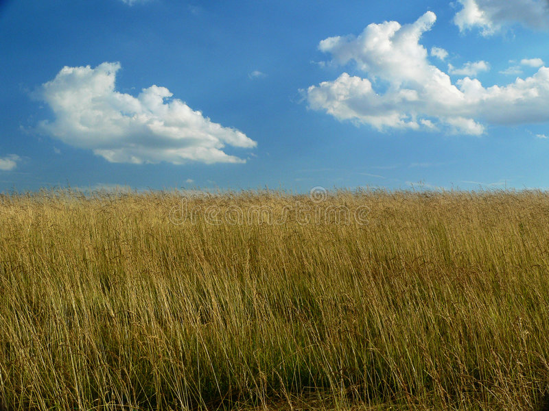 Bright Cloudy sky and farm field royalty free stock images