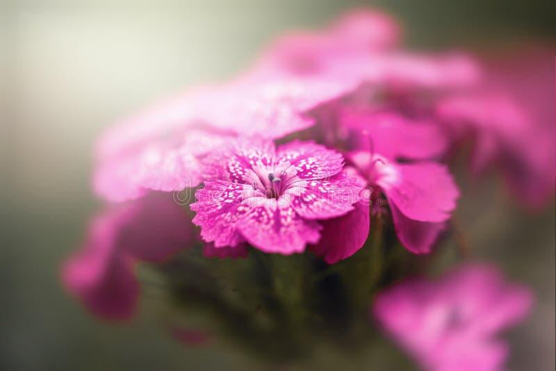 Bright clove garden. In the sunlight stock photography