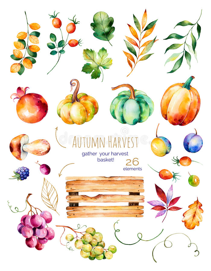 Bright collection with fall leaves,branches,wooden basket royalty free illustration