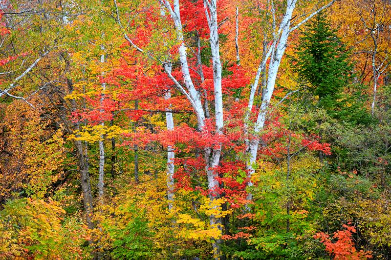 Color autumn trees in the park. Bright color autumn trees in the park royalty free stock photos