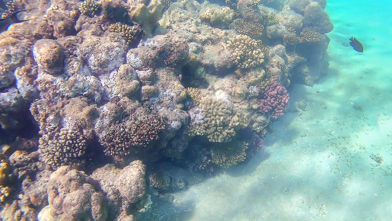 Bright colored coral reef in the Red Sea in Hurghada, Egypt, sun stock images