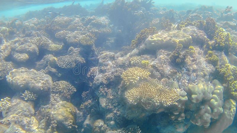 Bright colored coral reef in the Red Sea in Hurghada, Egypt, sun royalty free stock photo