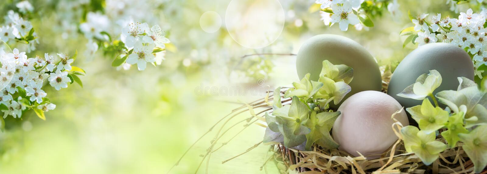 Easter eggs in spring. Bright colored easter eggs in a sunny spring landscape for easter wishes stock photos