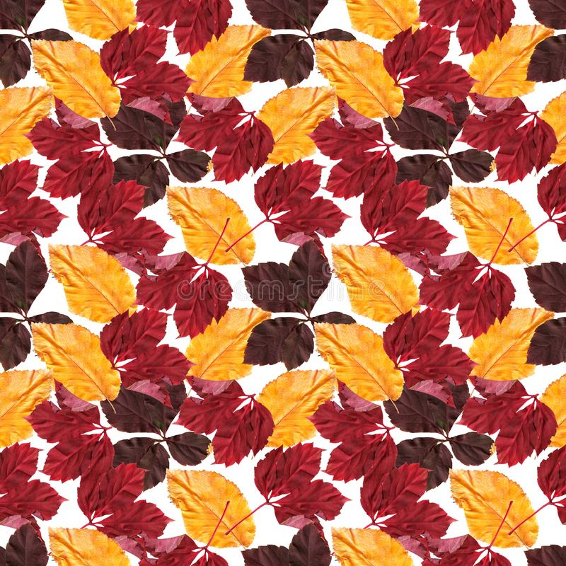 Bright colorful autumn leaves. Seamles pattern. Natural background. Mixed media vintage artwork vector illustration