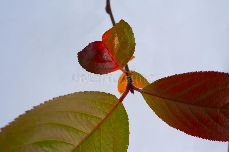 Bright colorful autumn twigs with a little leaf in the form of a heart royalty free stock photo