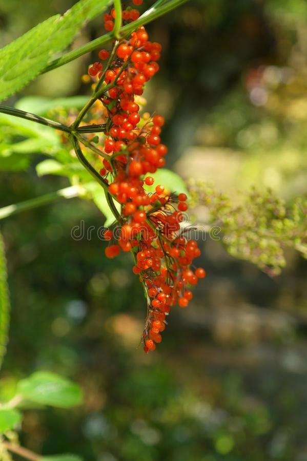Bright and colorful fruit. Fruit bright colorful greenfly red royalty free stock photos