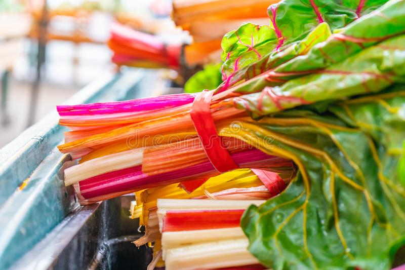 Bright, colorful orange, green, white and red swiss chard, with green leaves, in bundles, being sold at a farmer`s  market.  royalty free stock photos