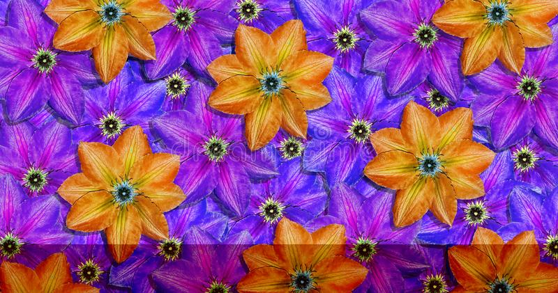 Bright colorful ornament of summer flowers. clematis flowers pattern texture background. stock photos