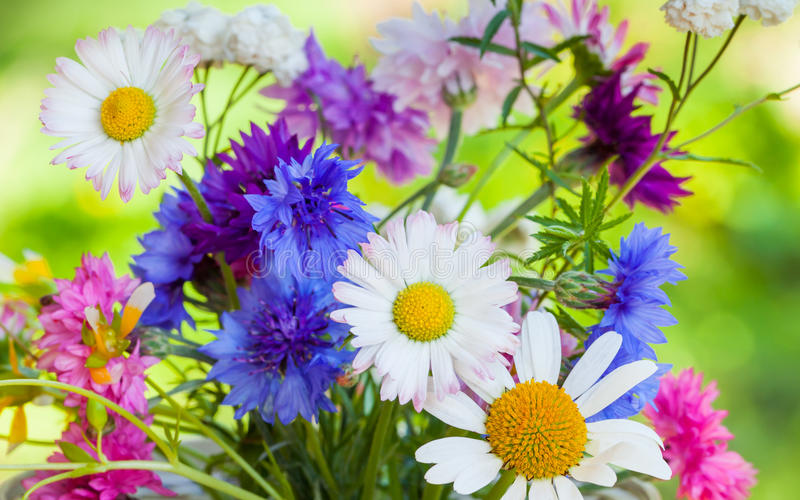 Bright colorful summer flowers royalty free stock images