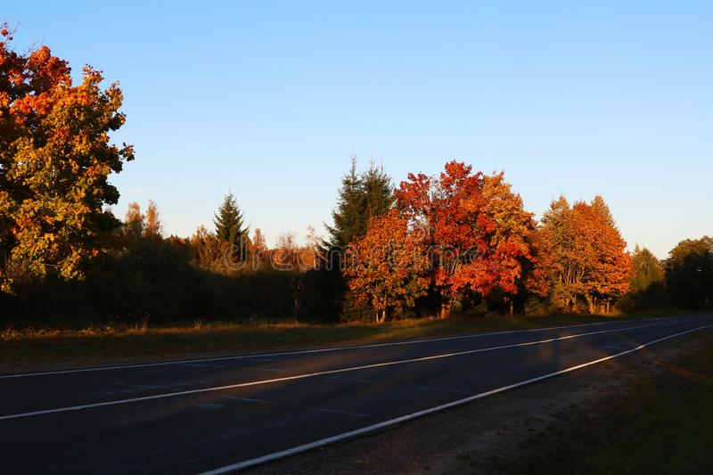 Bright colorful trees along the road in autumn.  stock photo