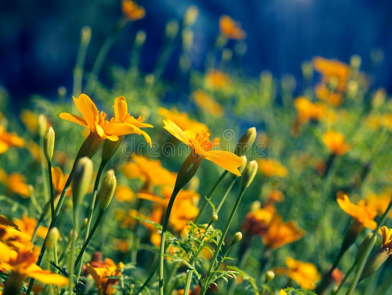 Bright and colorful wildflowers in the field stock photography