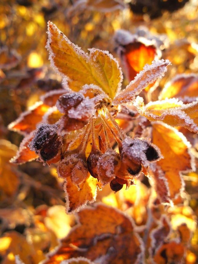 Bright Colors Of Autumn. Stock Photos