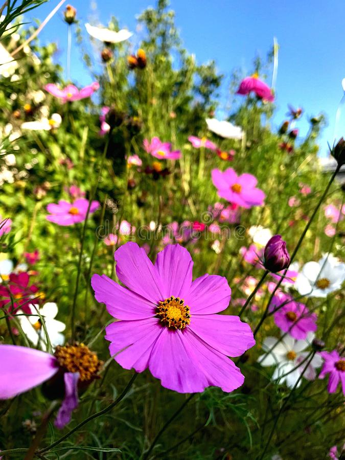Bright colors of summer flowers stock photography
