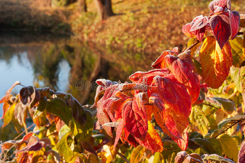Download The Bright Colors Of The Warm Autumn Stock Photo - Image: 27162674