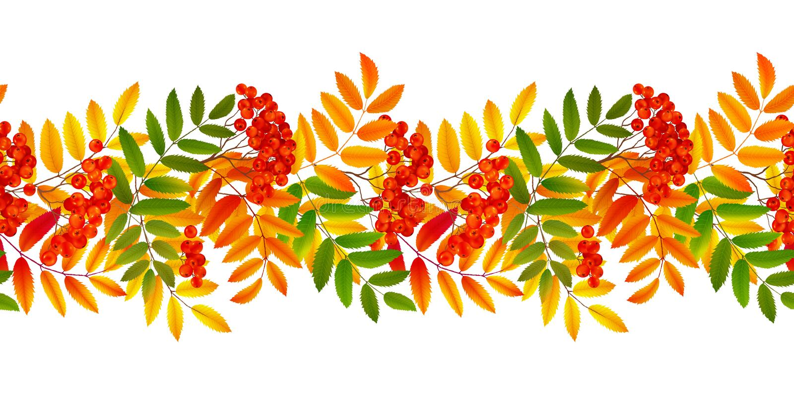 Bright colourful rowan berries and leaves autumn fall vector seamless border royalty free illustration