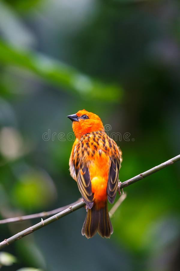 Bright colourful small bird royalty free stock photos