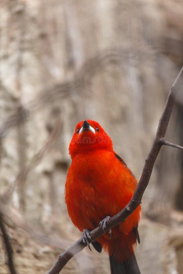 Bright colourful small bird royalty free stock photo