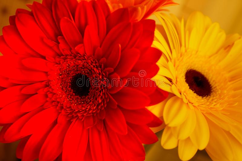 Bright contrasting flowers beautiful colors royalty free stock photography