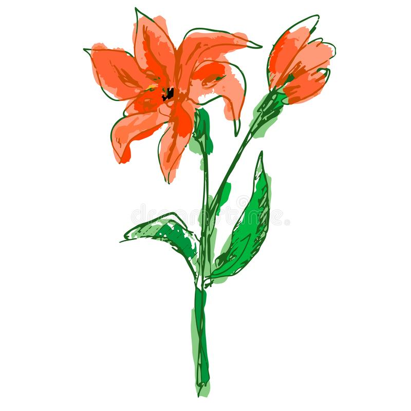 Bright coral lily flower with colorful petals, bud, green stem vector illustration