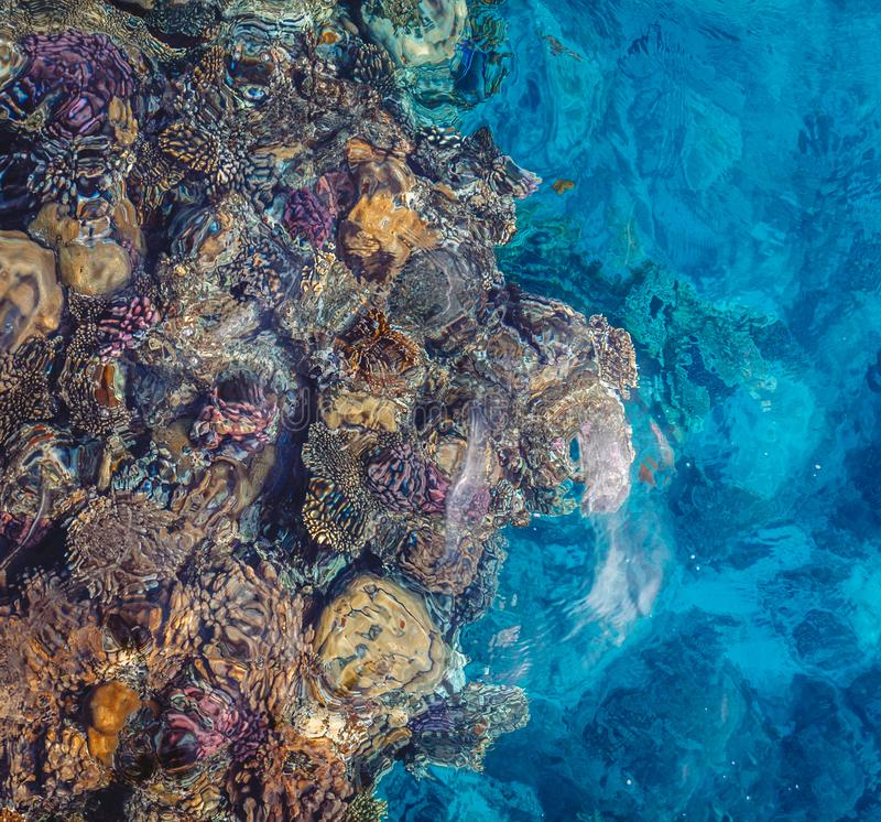 Bright coral reef with colorful fish of the Red Sea in Egypt. View from above stock image