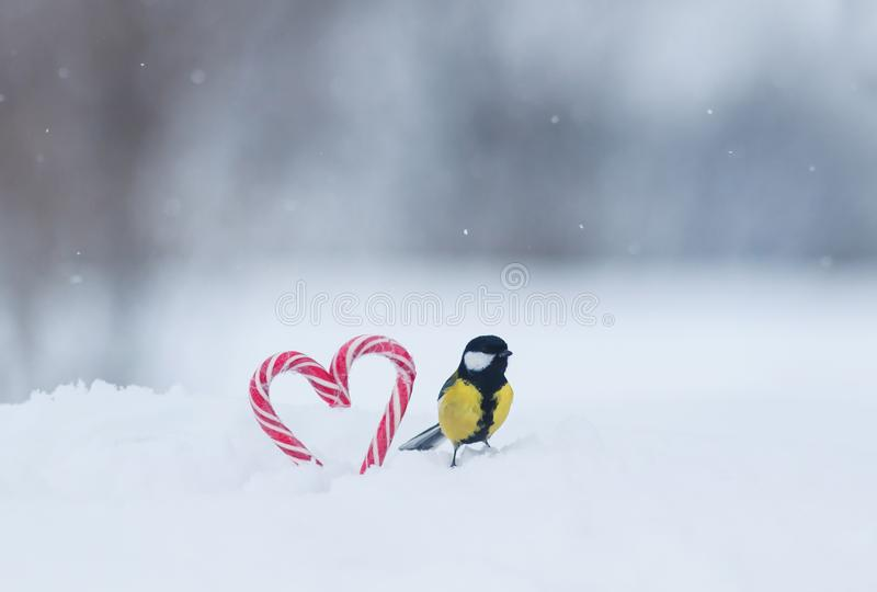 cute bird tit sitting on sweet red candy lollipops in the shape of a heart in white snow on a festive Valentine`s day stock photography