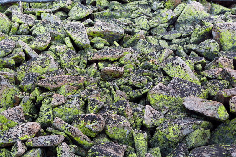 Bright and Dark Green Moss Lichen Fungus Covered Rocks royalty free stock photography