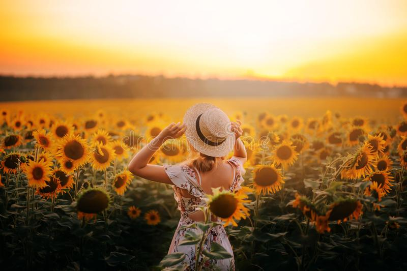 Bright delightful atmospheric photo, summer field of sunflowers stock photography