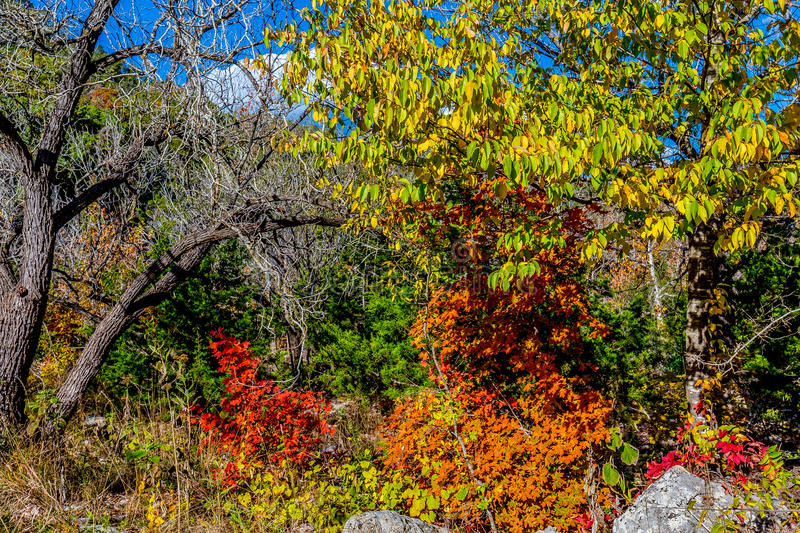 Bright Fall Colors of Lost Maples State Park, Texas. Beautiful Bright Fall Foliage of the Forests of Lost Maples State Park, Texas royalty free stock photo