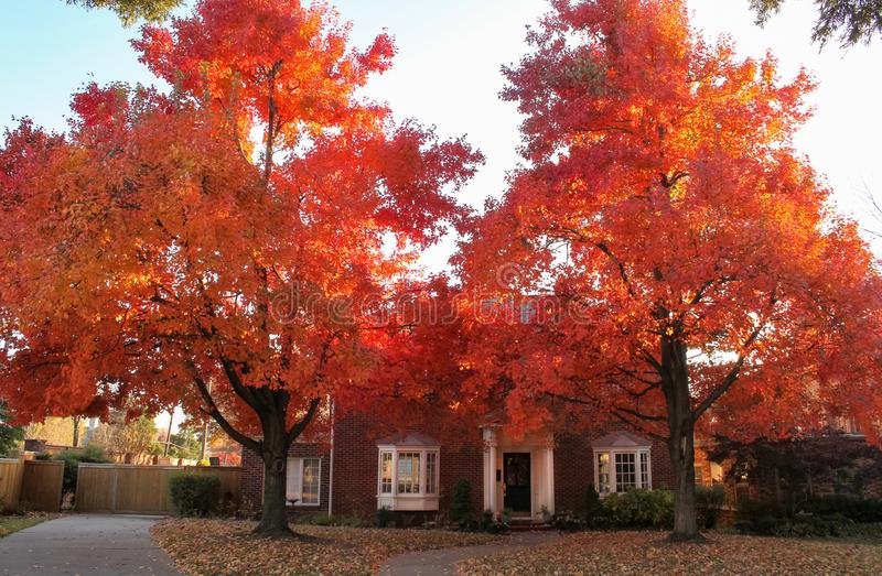 Bright Fall Trees in Front of Brick House in Tradional Neighborhood stock image