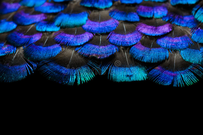 Bright feathers background. Set of fluffy feathers isolated on black background stock photography