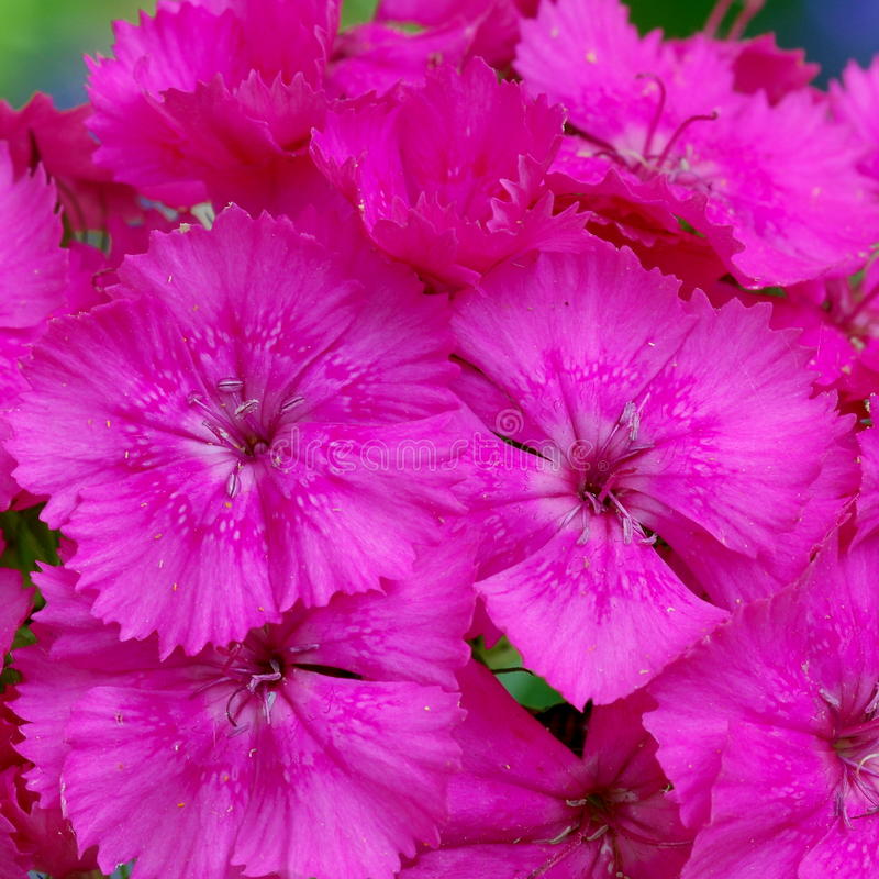 Bright flower background stock image